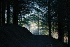 Vers la lumière (Julien Coudsi) Tags: forêt lumière violay loire france obscurité clairobscur arbre sapin chemin