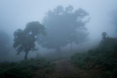 Mystery Lane (Aymeric Gouin) Tags: madeira madère portugal europe island ile nature landscape paysage paisaje landschaft mood atmosphere fog brouillard mist brume blue cold froid travel voyage olympus em10 omd aymgo aymericgouin
