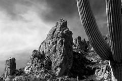 Desert Dreams:  Arizona's Superstition Wilderness (jswensen2012) Tags: cactus saguarocactus desert sonorandesert superstitionwilderness superstitionmountains arizona monochrome