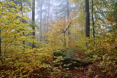 Sous-bois d'automne (Excalibur67) Tags: nikon d750 sigma globalvision art 24105f4dgoshsma paysage landscape forest foréts arbres trees automne autumn vosgesdunord feuillage foliage