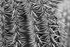 IMG_0098 (www.ilkkajukarainen.fi) Tags: cactus talvipuutarha helsinki visit travel travelling happy life museum stuff blackandwhite mustavalkoinen monochrome suomi finland finlande eu europa scandinavia