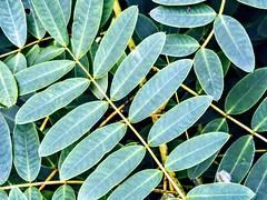 Leaves and Stems (pmorris73) Tags: arboretum pennstateuniversity statecollege pennsylvania century 2ca0319 3ca0419 4ca0419 5ca0519 6ca1019 7ca2319 8cb0819 9cc0319