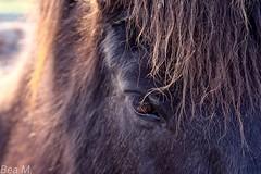 Pferd ganz nah (trixi.midik) Tags: pferd braun outdoor tier natur canon 50mm koppel