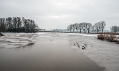 Partially frozen lake with resting mallards (RuudMorijn-NL) Tags: animal banks bare bird birds blue cloud cold dawn duck dutch edge europe foreground frost frozen ice lake landscape mallard nature netherlands nobody outdoors panorama park partially plant pond reflections river row rural scene scenic season silhouette silhouettes sky snow tall trees water waterfowl weather white wild wildlife winter gatvandenham lagezwaluwe gemeentedrimmelen noordbrabant northbrabant koud ijs sneeuw seizoen landschap meer waterkant oever rij bomen kaal perspectief eenden bewolkt hemel lucht grijs gray minimalism weids