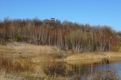 DSC04734 (bluesevenxp) Tags: geiseltalsee mücheln marina lake see ufer floating