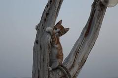 Greece (unciclamino) Tags: cat tree trees gatto greece summer greek red kitten sea lights