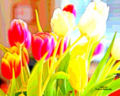 IMG_4200 Suburbia (Cyberlens 40D) Tags: nature botany floral flora flowers tulips colors spring beautiful red yellow white green petals gifts blur
