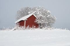 Little red shed (Helena Normark) Tags: redshed shed snow winter ust leinstrandmarka trondheim trøndelag sørtrøndelag norway norge sonyalpha7ii a7ii 35mm lensbaby burnside35 lensbabyburnside35 lensbabylove seeinanewway
