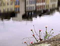 Petit  bouquet printanier ... (Eric DOLLET - Ici et ailleurs) Tags: ericdollet bretagne finistère reflet