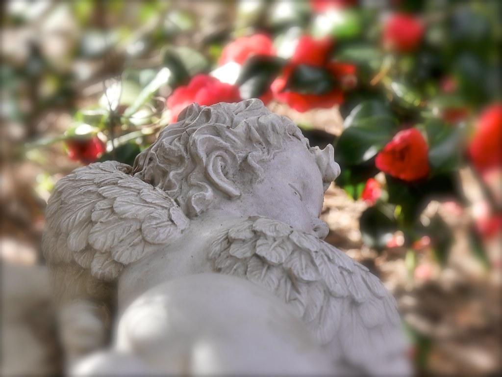 The Worlds Best Photos Of Engel And Garten Flickr Hive Mind