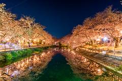 Illuminated cherry blossoms (Hiro_A) Tags: sakura cherryblossom flower pond saijo ehime shikoku japan lightup illumination night water reflection nikon d7200 sigma 1770mm 1770