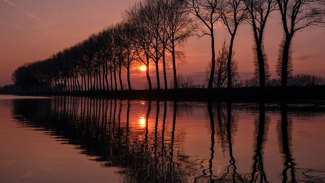 Dusk shillouette trees