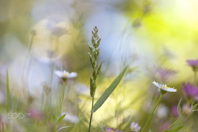 Обои лето, растения, луг, полевые цветы картинки на рабочий стол, раздел цветы - скачать