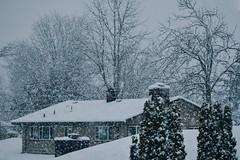 20190211_Winter Snowstorm-2 (Colin CTW) Tags: winter snow snowstorm storm ice nikon d850 70200 flakes