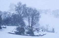 TREBIÑO ELURRA 3 (juan luis olaeta) Tags: paisajes landscape fog foggy nieblas laiñoa nieve elurra snow natura fujifilmxt2 photoshop lightroom trebiño