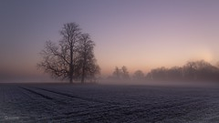 Peace before somber time (gaztotalmods) Tags: frost trees subtle sunrise fog landscape hertfordshire