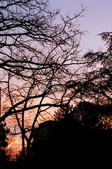 Delicate sunrise (mkk707) Tags: olympuspenfv olympusgzuikoautos114f40mm kodakportra400 wwwmeinfilmlabde film analog 35mmfilm halfformat halfframe sunrise silhouette sky clouds colours backlight vintagelens vintagefilmcamera