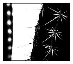 Dark Knight (Tom Levold (www.levold.de/photosphere)) Tags: fuji xpro2 xf90mm sw bw cactus kaktus sukkulente succulent abstract abstrakt