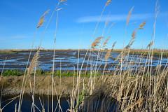 Marjal de Pego 13 (dorieo21) Tags: marjal pego marsh