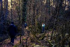 Into the Woods (deppy_kar) Tags: woods forest trekking trees vovousa arkoudorema zagori valiacalda epirus aoos nikon nikkor nikond5200 d5200 dslr greece βοβουσα βωβουσα βαλιακαλντα ζαγορι ηπειροσ μονοπατι πεζοπορια δασοσ