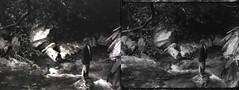 Bridge SD vs 4K Scan (Sean Anderson Media) Tags: filmo70 motionpicture blackandwhite blackandwhitefilm beforeandafter 4kscan filmscan kodakfilm vintagecamera forest nature stream mountainstream shortfilm filmframe filmstill filmmediaorg reversalfilm monochrome vintage retro bellandhowellfilmo70 bellandhowellfilmo