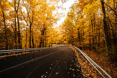 Autumn Road [11.01.18] (Andrew H Wagner | AHWagner Photo) Tags: 5dmk3 5d3 5dmkiii 5dmarkiii 5dmark3 canon eos 1635l 1635mm f4 f4l is usm ultrawideangle wideangle nature trees tree fall autumn outdoors outside explore exploration exploring maryland md prettyboyreservoir prettyboy reservoir landscape orange yellow road vanishingpoint