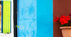Cromie5 (Ankar403) Tags: colore composizione fiore rosso blu finestra strada parete edificio luce contrasto italia europa color composition flower red blue window road wall building light contrast italy europe