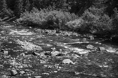 Clear Creek in black and white. Taken on 8-9-18, in Clear Creek Canyon, Colorado.  . . . . .  #CanonRebelT5 #Canon #Rebel #T5 F/5.6 55mm 1/2500s ISO-640 #oooShiny #oooShinyPhotography #ClearCreek #blackandwhite #ClearCreekCanyon #Colorado #bnw #bnw_captur (oooshinyphotography) Tags: canonrebelt5 clearcreekcanyon naturephotography trees coloradoshared coloradotography canon oooshiny blackandwhite creek colorado clearcreek bnwcaptures blackandwhitephotography t5 coloradolove rebel treephotography nature tree bnw water coloradophotography oooshinyphotography viewcolorado coloradophotographer bnwphotography river