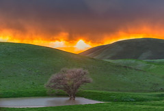 (Marc Crumpler (Ilikethenight)) Tags: landscape usa california bayarea sfbayarea eastbay contracostacounty alamedacounty livermore morganterritory marccrumpler aunmm sunset clouds tree water pond hills canon canon6d 6d 70300mmf456lisusm