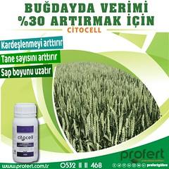 profert çit (Profert Gübre) Tags: fertilizer gübre sulama damlama sebze seracılık sebzecilik sera seed soil toprak