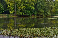 The Still Waters of Kendall Lake in Cuyahoga Valley National Park (thor_mark ) Tags: azimuth342 camranger canvas capturenx2edited cloudy colorefexpro cuyahogavalleynationalpark day7 glasslikereflections imagecapturewithcamranger kendalllake kendalllakearea kendalllakeloop lake lakereflectionsonwater landscape lilypads lookingnnw lowerpeninsulaheartland midwestgreatlakesarea mostlycloudy nature nikond800e northamericaplains ohiowabasheriearea outside overcast pond portfolio project365 reflections reflectionsonlake reflectionsonpond reflectionsonwater travel trees triptogatewaymammothcuyahoganationalparks waterreflections waterreflectionsoftrees ohio unitedstates