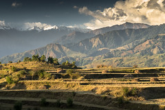 Himachal Pradesh (Kieran Campbell) Tags: himalaya bir himachalpradesh terraces landscape sunset mountains india