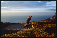 18-1228-ektaTIFF-32.jpg (richerrd) Tags: dogs 50mm color ektachrome 135 chantal 2018 film leica