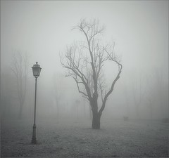 ...che ci facciamo compagnia (Aellevì) Tags: heymanzucchero nebbia albero solo solitudine lampione due