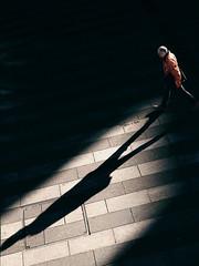First light (Guido Klumpe) Tags: spot color farbe mann men kontrast contrast gegenlicht shadow schatten silhouette gebäude architecture architektur building perspektive perspective candid street streetphotographer streetphotography strasenfotografie strase hannover hanover germany deutschland city stadt