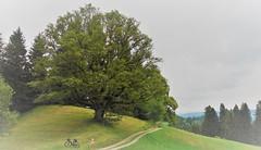 DSC05619 (ursrüegsegger) Tags: linden juli august getreideernte bauernhöfe landschaft regenbogen