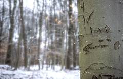 That Way (JMS2) Tags: nature trees snowing walk path graffiti forest bare winter arrow