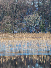 Loch Pityoulish (Highlandscape) Tags: iainmacdiarmid highlandscape winter aviemore coylumbridge reflections outdoor rural weather rocks unitedkingdom reeds cloud highlandscapezenfoliocom lochcottage uk ice olympus natural highlands water beauty colour loch trees scotland snow cold lochpityoulish em5markii landscape sky hill ecosse countryside highland mountain