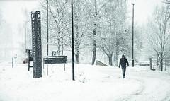 Walking in the snow (||-SAM Nasim-||) Tags: walking snow winter season sweden europe alone street photo pleasant weather minus temperature road blocked art photography nikon user sam nasim