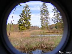 Hublot sur la nature 2 (Jean-Daniel David) Tags: nature tourbière étang roseau arbre eau ciel vert verdure pin sapin reflet réservenaturelle hublot maracon suisse suisseromande vaud groupenuagesetciel larogivue