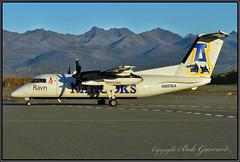 """N887EA Ravn Alaska - UAF """"Nanooks"""" (Bob Garrard) Tags: n887ea ravn alaska uaf nanooks de havilland canada dhc8106 dash 8 anc panc"""