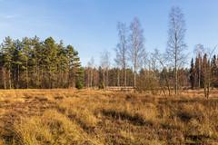 Den Treek-Henschoten (jan.vd.wolf) Tags: leusden utrecht nederland nl nature natuur landschap landscape treek henschoten bos wald forest forêt bosque boom tree