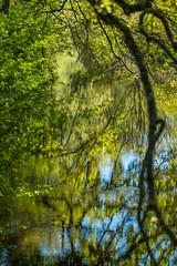 Zartes Grün (KaAuenwasser) Tags: wasser spiegelung fluss landschaft grün wald wiese feld ufer ast äste baum bäume eiche