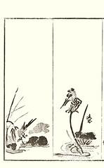 Left – white wagtail; Right – sacred lotus and barn swallow (Japanese Flower and Bird Art) Tags: flower sacred lotus nelumbo nucifera nelumbonaceae bird white wagtail motacilla alba motacillidae barn swallow hirundo rustica hirundinidae buncho tani daisuke kawase nanga woodblock picture book japan japanese art readercollection