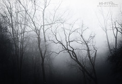 Into the Void (Hi-Fi Fotos) Tags: scary spooky silent woods outdoor nature trees silhouette mist fog weather winter cold branches forest murky mono bw blackandwhite nikkor 50mm nikon d7200 dx hififotos hallewell