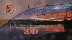 BONNE ANNEE 2019 ! (ÇhяḯṧtÖρнε) Tags: 09 canon domainedesoiseaux france ladddo bonneannee2019 cartedevoeux mazères ariège occitanie