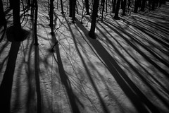 The Creeps (jasohill) Tags: treees landscape tohoku nature spirit light prefecture shadows contrast hachimantai dark photography life woods creepy terror 2019 japan forest