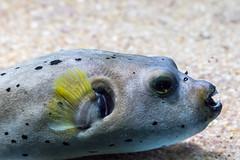 Acuario Grove. Pontevedra (miguelno) Tags: acuario grove pontevedra galicia panasonic lumix fz1000