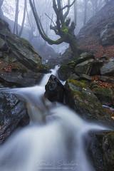 El gigante del agua (tsanchezruiz) Tags: agua haya largaexposición españa paísvasco niebla seda