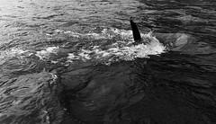 IMGP9566 (graemes83) Tags: pentax ilford film 135 35mm black white